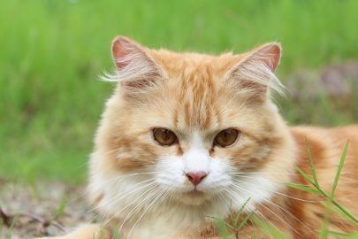 Een kat in het bakkie