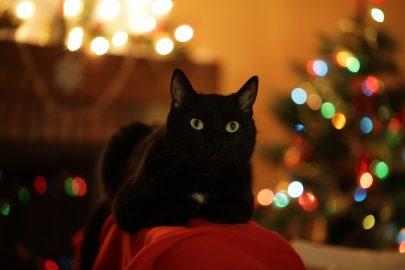 Kerstmenu voor gezonde katten
